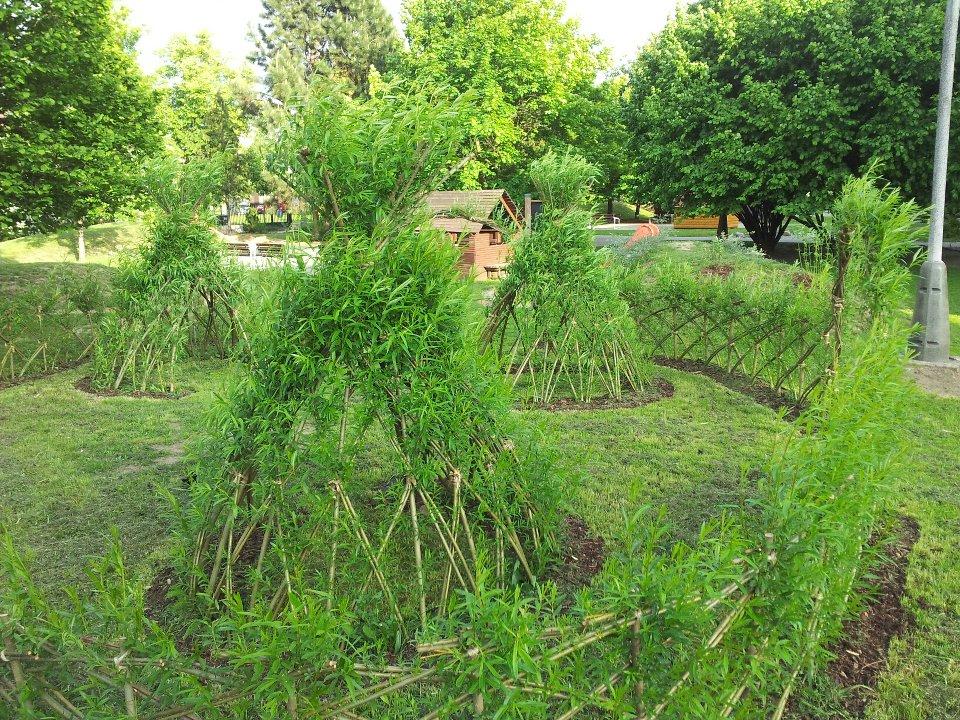 Živé stavby vrby