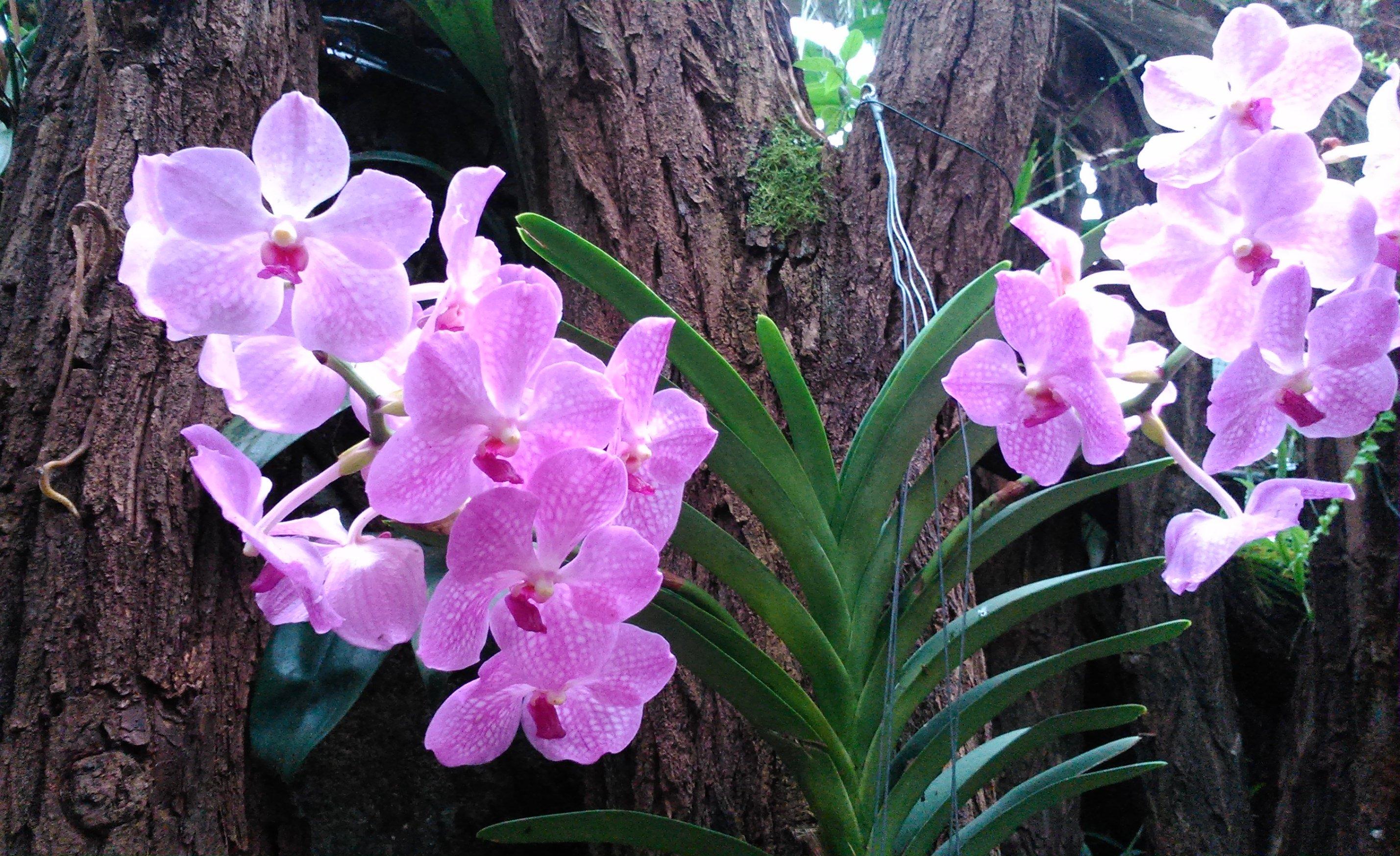 Orchideje na stromě