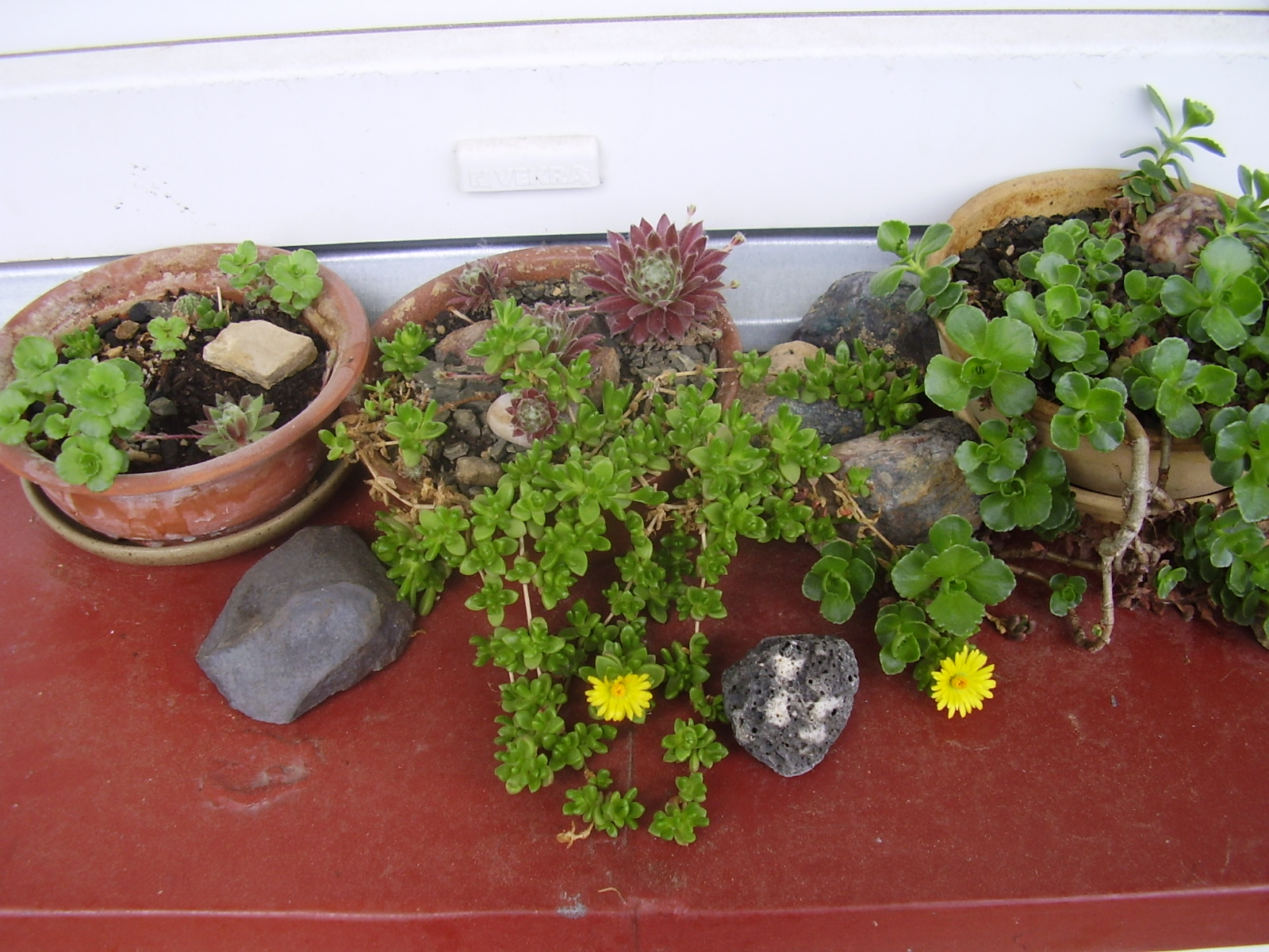 Kvetoucí skalničky