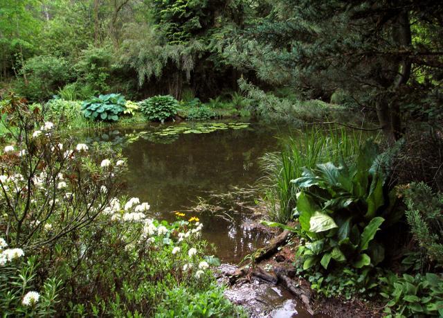Zahrada, kterou si příroda vzala za svou-jezírko