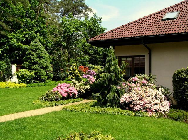 Rododendrony a jehličnany