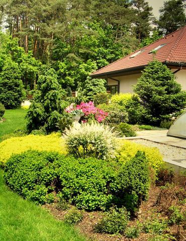 Zahrada s rododendronem