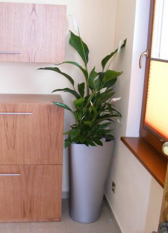Květiny v bytě