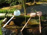 Pramen v bambusu