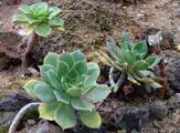 Pokojové rostliny sukulenty
