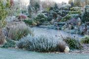 Zamrzlé zahradní jezírko