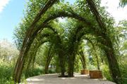 Živá stavba - vrbové oblouky