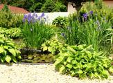 Jezírko s irisy