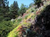 Skalní step v přírodní zahradě